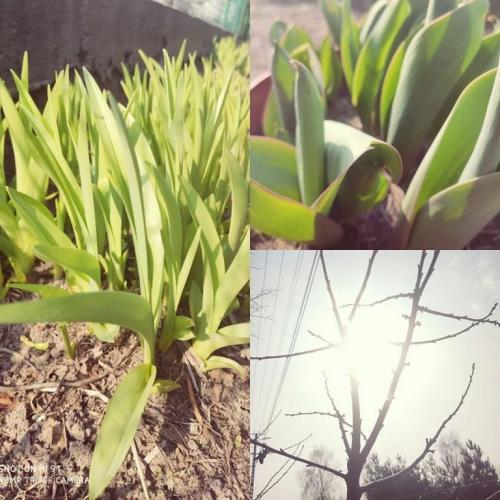 Akcja Wiosna